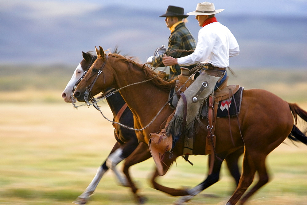cowboys horseriding, Oregon, USA