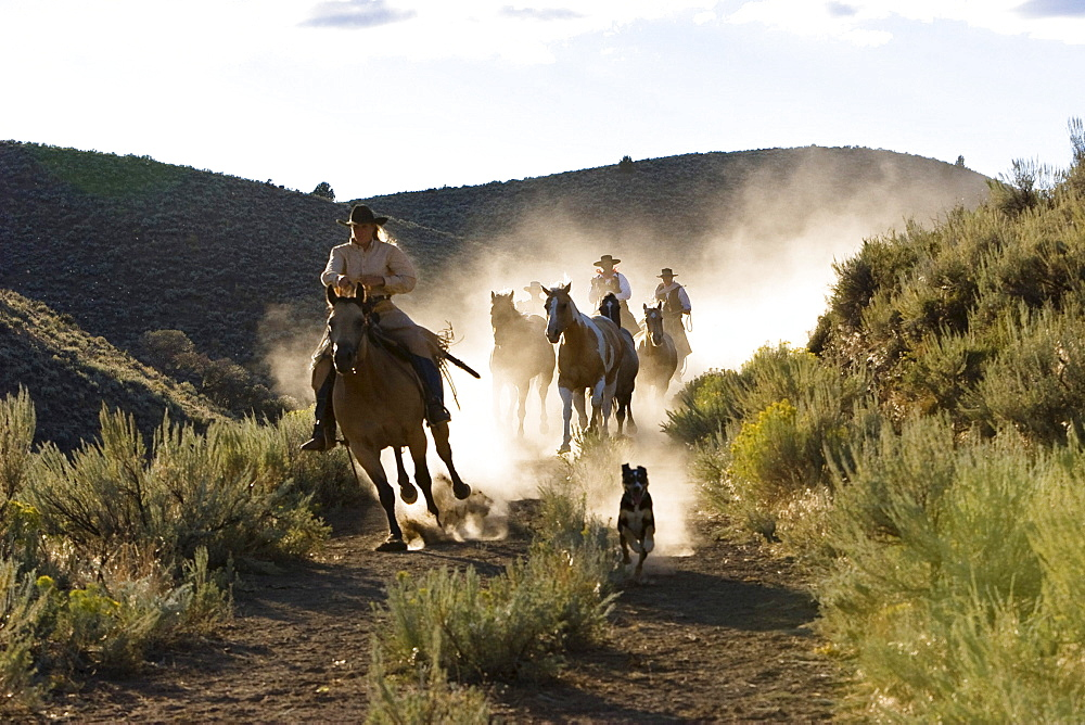 cowboys riding, Oregon, USA