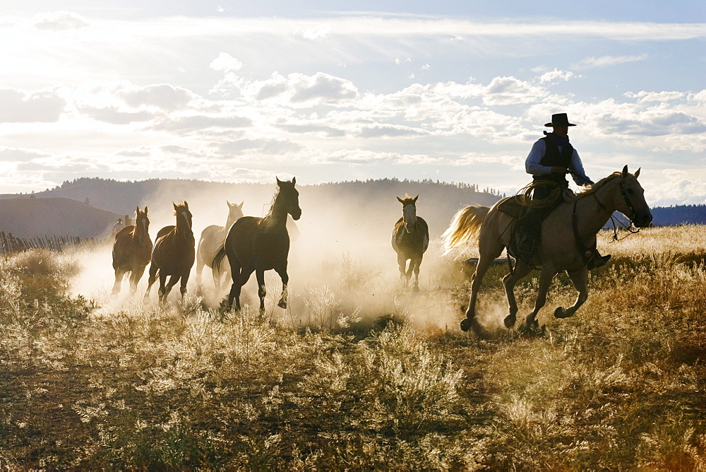 cowboy with horses, Oregon, USA