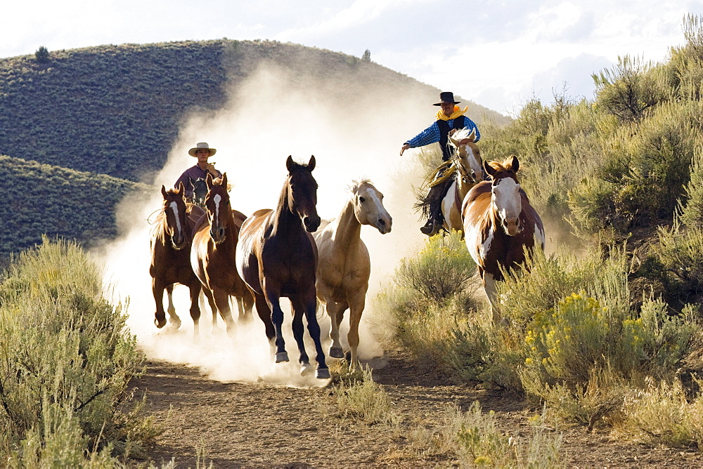 cowboys driving horses, wildwest, Oregon, USA