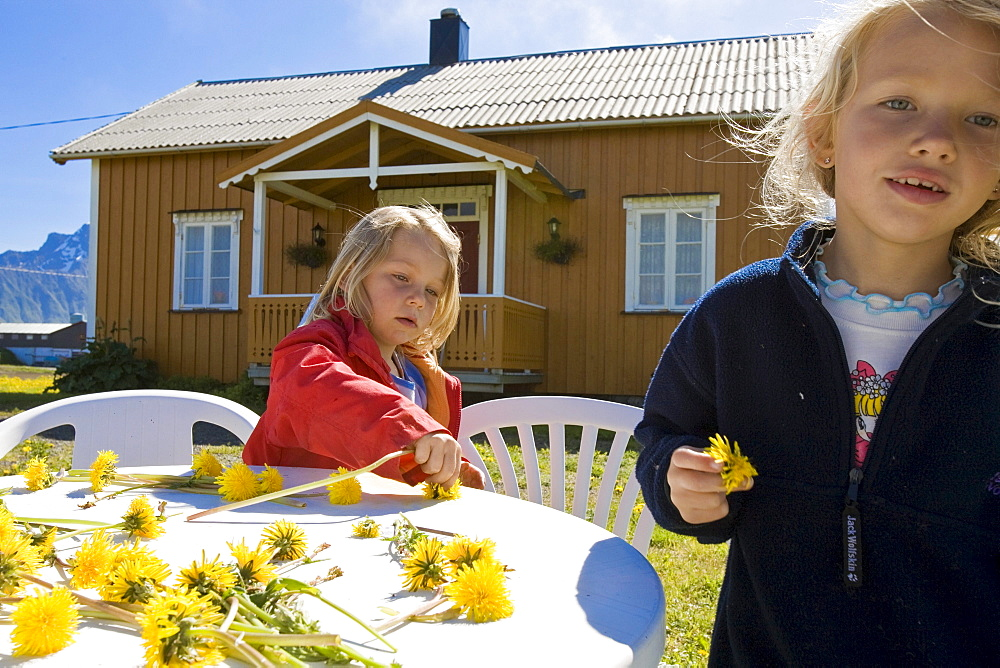 Two girls, children playing with dandelion flowers in front of wooden house, taraxacum, near Hadselsand, Austvagoya Island, Lofoten, Norway