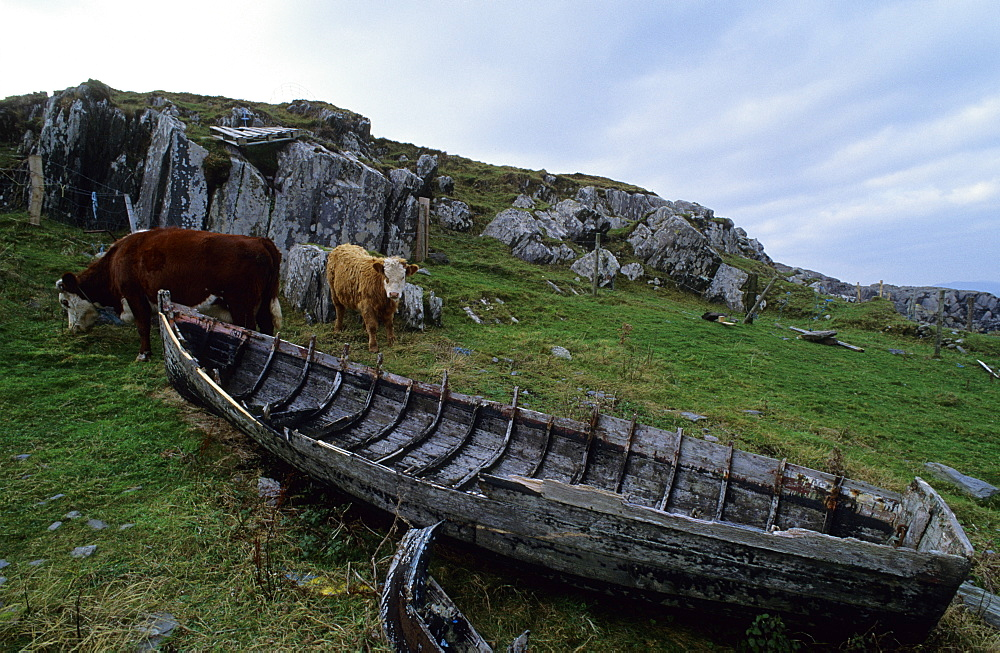 Europe, Great Britain, Ireland, Co. Kerry, Beara peninsula, ship wreck at Garnish Point