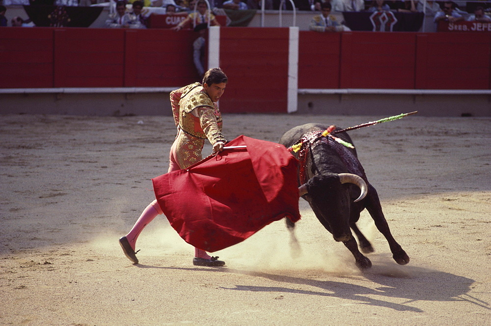 A raging bull attacking the bullfighter's red cape, arena of Granada, Andalusia. Spain