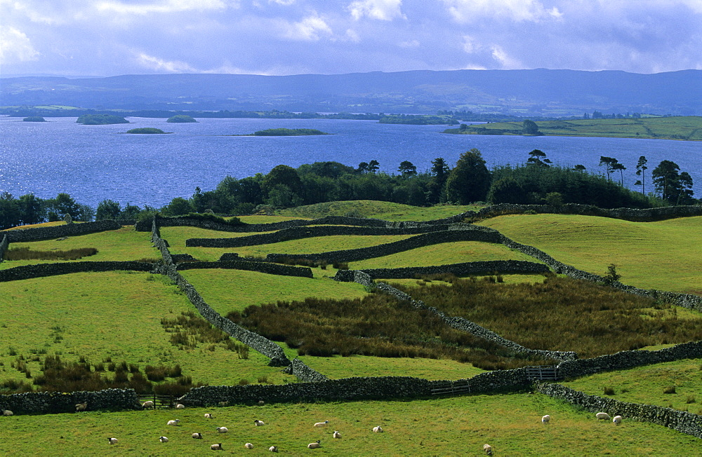 Meadow landscape with dry stone walls, Lough Corrib, Connemara, Co. Galway, Ireland, Europe