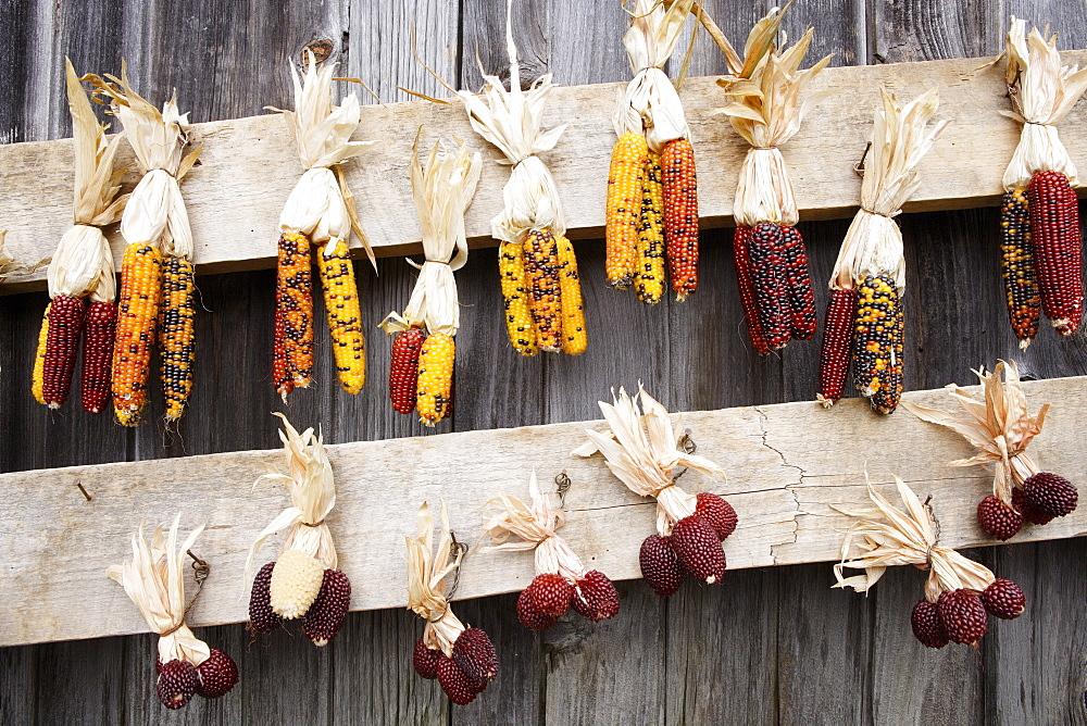 Corn, Neu England, USA