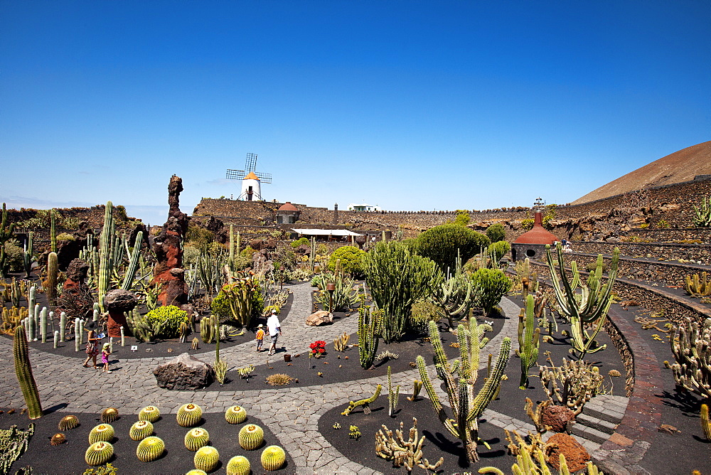 Windmill and cacti, botanical garden, Jardin de Cactus, architect Cesar Manrique, Guatiza, Lanzarote, Canary Islands, Spain, Europe
