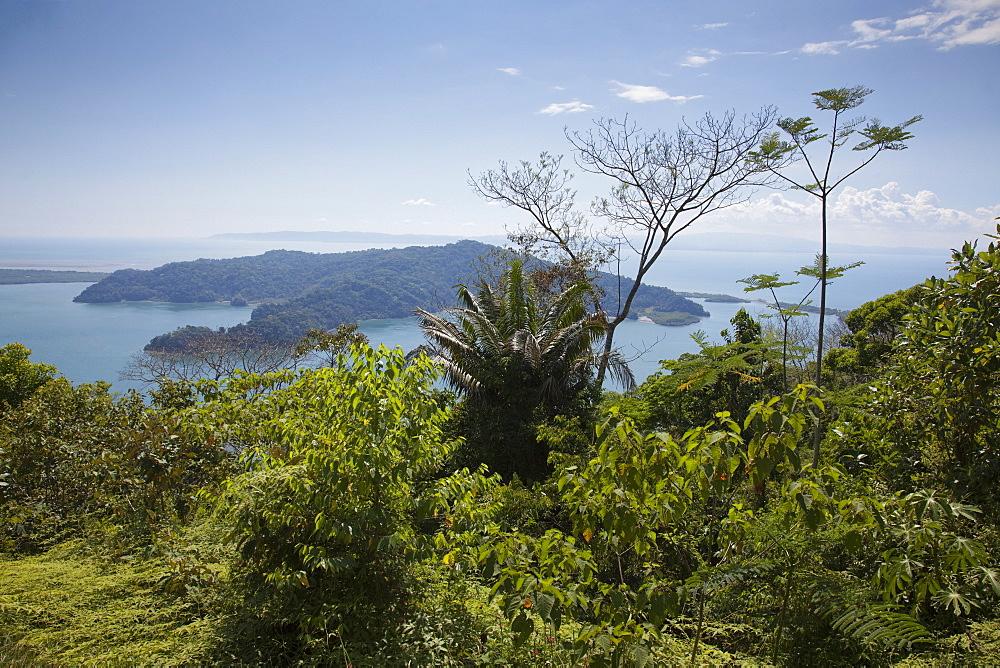 Rainforest and coastline of Golfito Bay, Golfito, Puntarenas, Costa Rica, Central America
