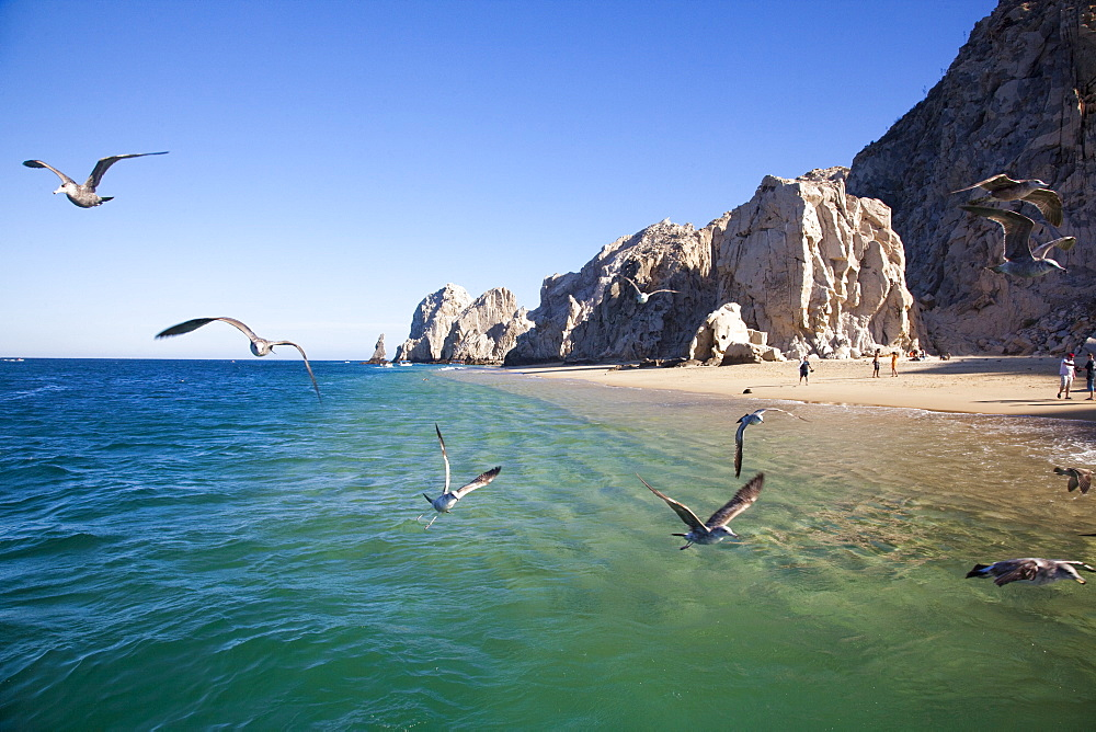 Seagulls and rocks near Lands End, Cabo San Lucas, Baja California Sur, Mexico, Central America