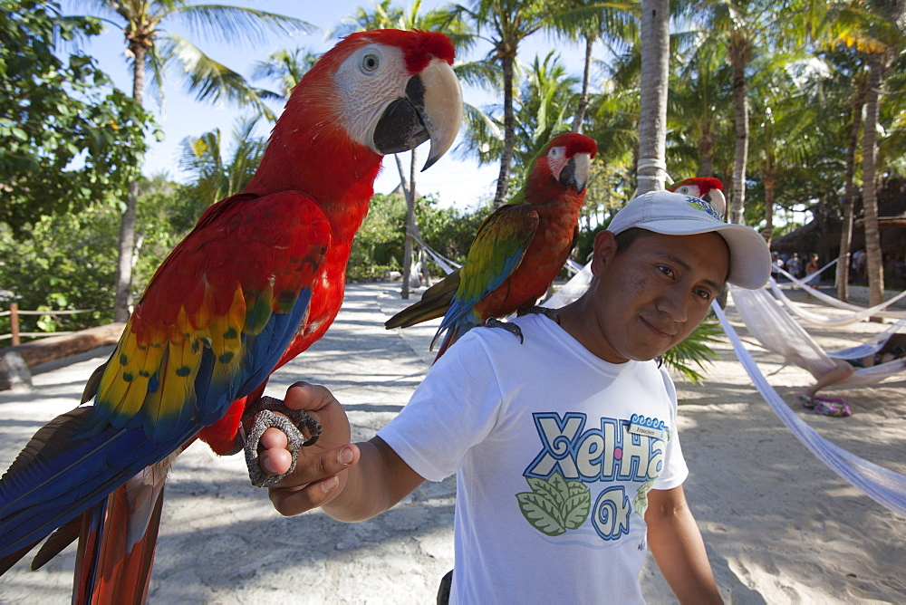 Man with Scarlet Macaw, Ara macao, parrots at Xel-Ha Water Park, Tulum, Riviera Maya, Quintana Roo, Mexico