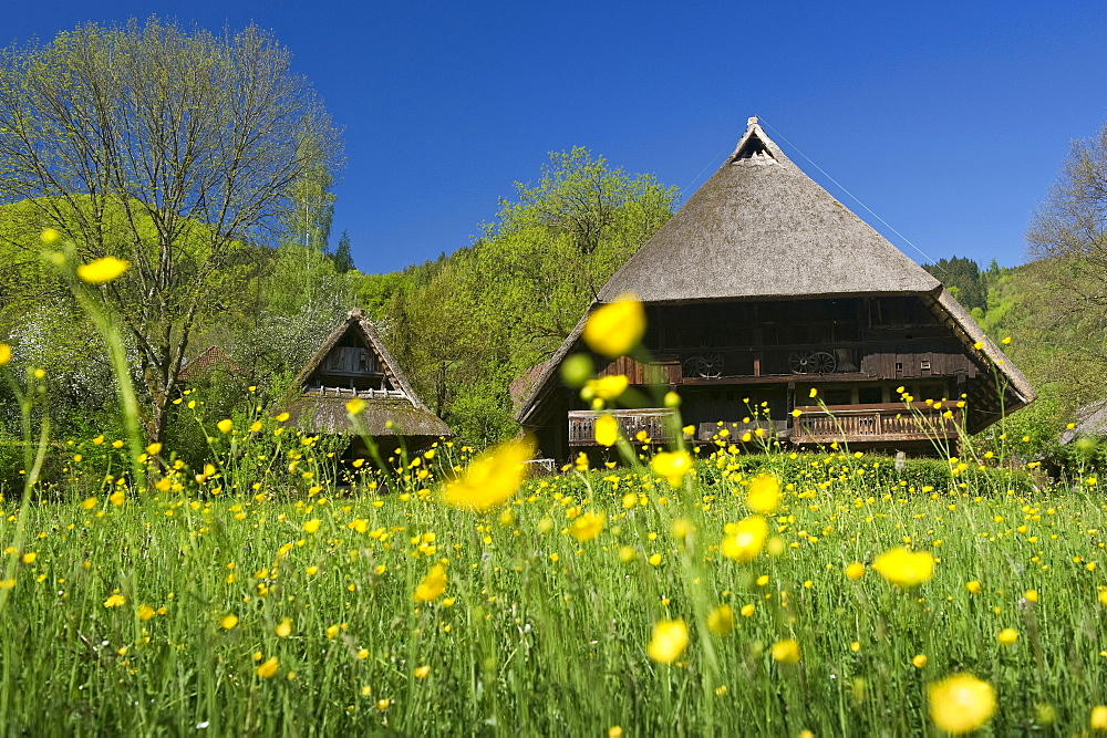 Houses at the Black Forest Open Air Museum, Gutach, Black Forest, Baden-Wuerttemberg, Germany, Europe