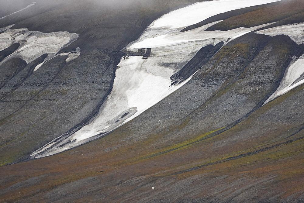 Polar bear in the distance, Nordaustlandet, Svalbard, Norway, Europe