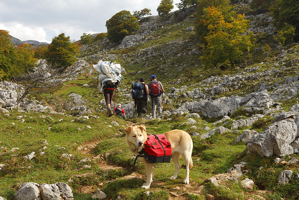 Hikers and dog of Ignacio, keeper of Refugio Vega de Ario, transport of supplies, western Picos de Europa, Parque Nacional de los Picos de Europa, Picos de Europa, Province of Asturias, Principality of Asturias, Northern Spain, Spain, Europe