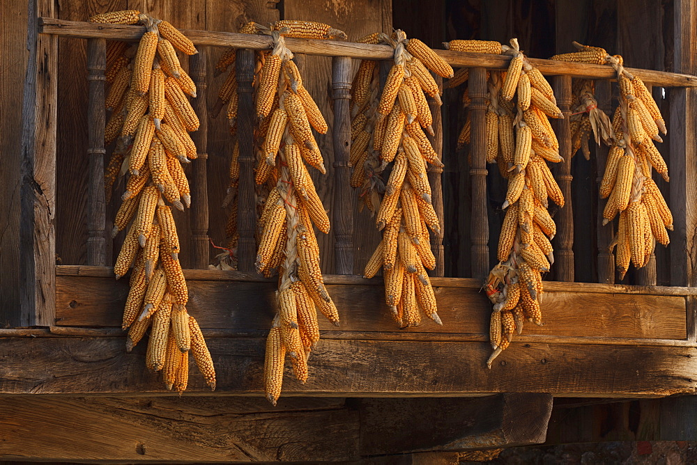 drying maize ears, Horreo, traditionel storehouse, granary, Torazo, near Infiesto, province of Asturias, Principality of Asturias, Northern Spain, Spain, Europe
