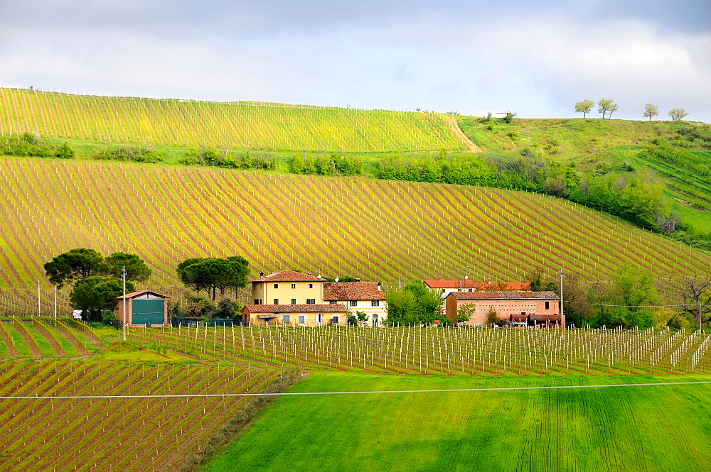 Winery near Dozza near Imola, Emilia-Romagna, Italy