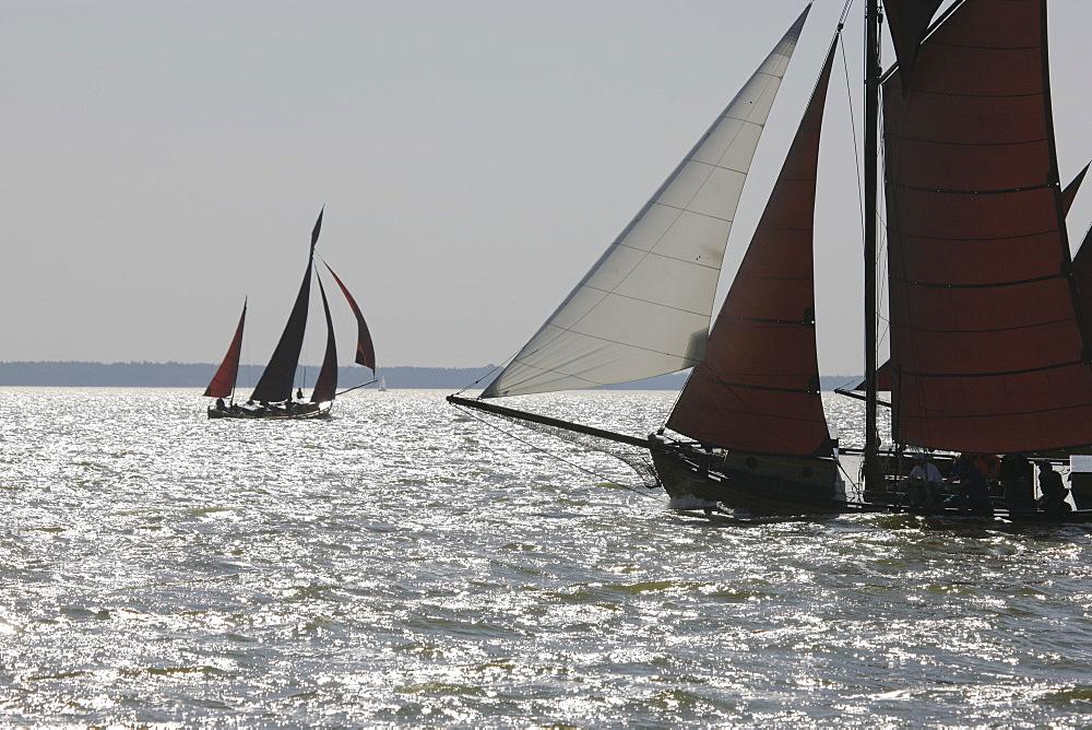 Back lit sailing boats at Saaler Bodden, Fischland Darss Zingst, Mecklenburg Western Pomerania, Germany, Europe