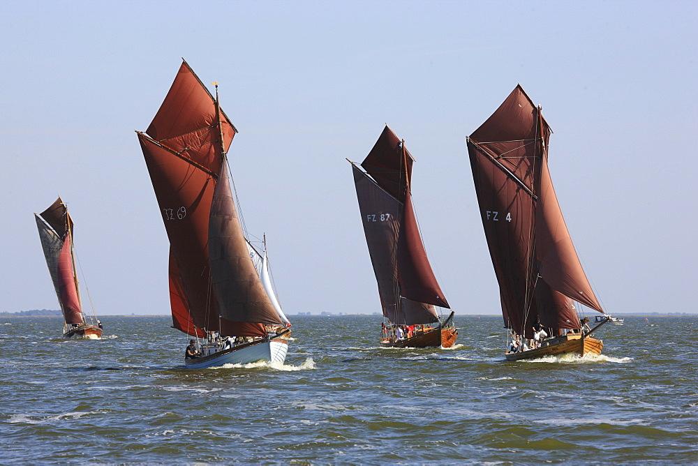 Sailing boats at Saaler Bodden, Fischland Darss Zingst, Mecklenburg Western Pomerania, Germany, Europe