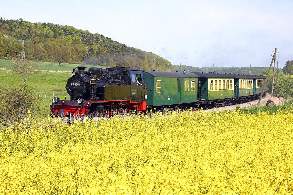Steam train Rasender Roland at canola field, Island of Ruegen, Mecklenburg Western Pomerania, Germany, Europe