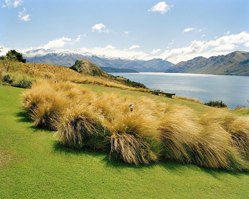 Blooming grass at the garden of Whare Kea Lodge at Lake Wanaka, Wanaka, Central Otago, South Island, New Zealand