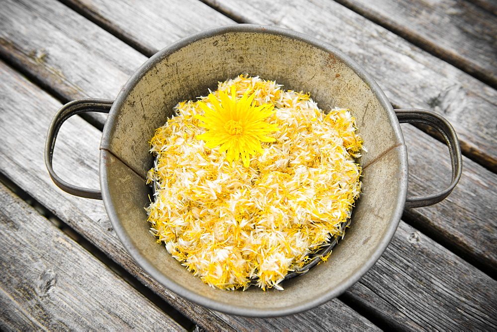 Common dandelion flowers in a bucket, dried flowers, Homemade
