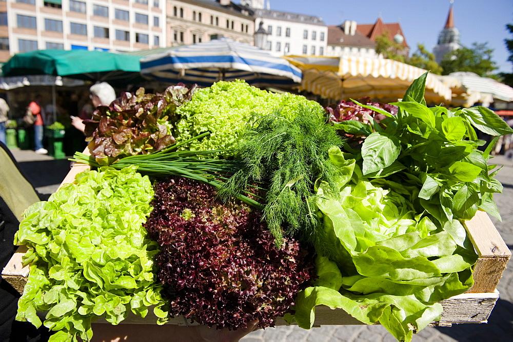 Salad, shopping at the market, Viktualienmarkt, Munich, Bavaria, Germany