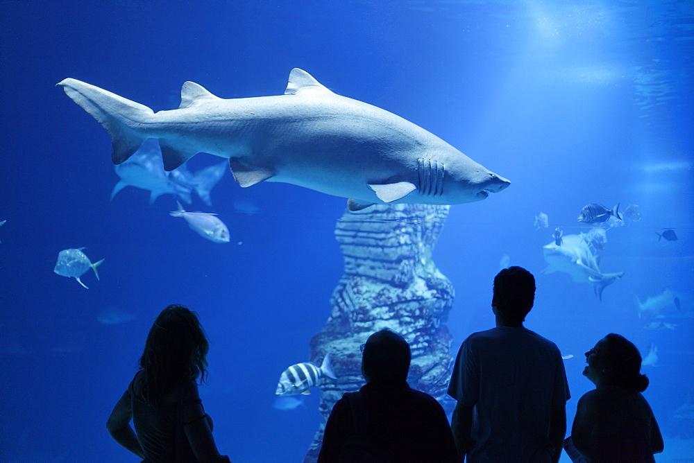 Shark tank, L' Oceanografic, the largest aquarium in Europe, Valencia, Valencia, Spain