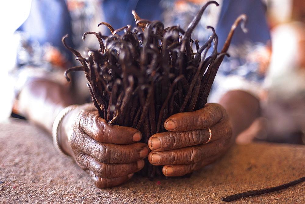 Man holding vanilla pods, Madagascar