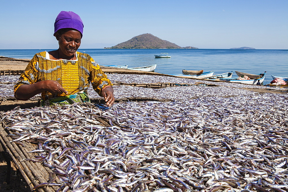 A woman drying fish, Matemba or Usiba, Chembe village, Lake Malawi, Malawi, Africa