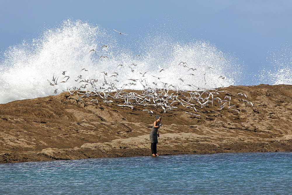 Woman fishing at Castle Point, seabirds, Castle Point, North Island, New Zealand