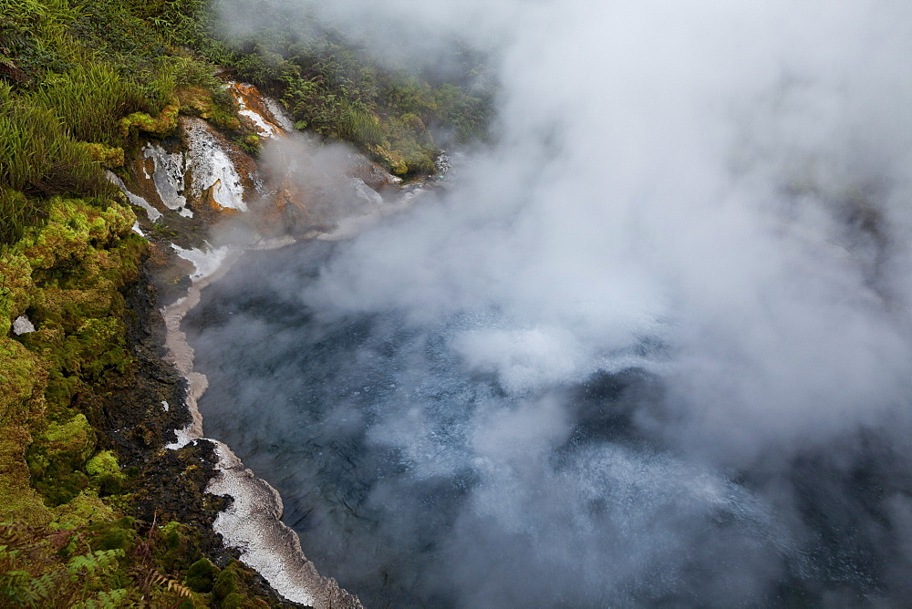 Hot springs and steam from the thermal springs, Waikite Valley Thermal Pools, Rotorua, North Island, New Zealand