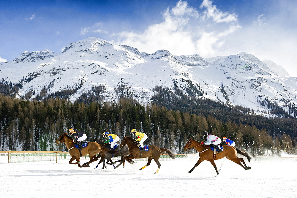 White Turf Horse Race 2013, St. Moritz, Engadine valley, canton of Graubuenden, Switzerland
