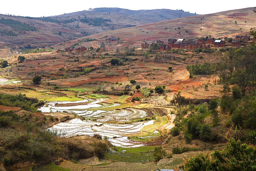 Rice fields, paddyfields near Ambohimahasoa, highlands, Madagascar, Africa