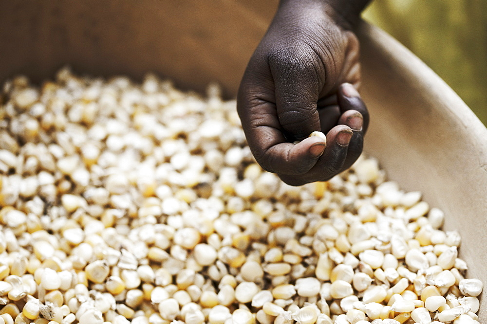 Hand above a bowl with grains of corn, Magadala, Mali