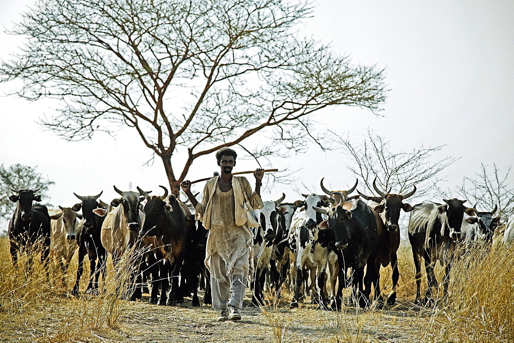 Cattle herdsman in East Sudan, Africa