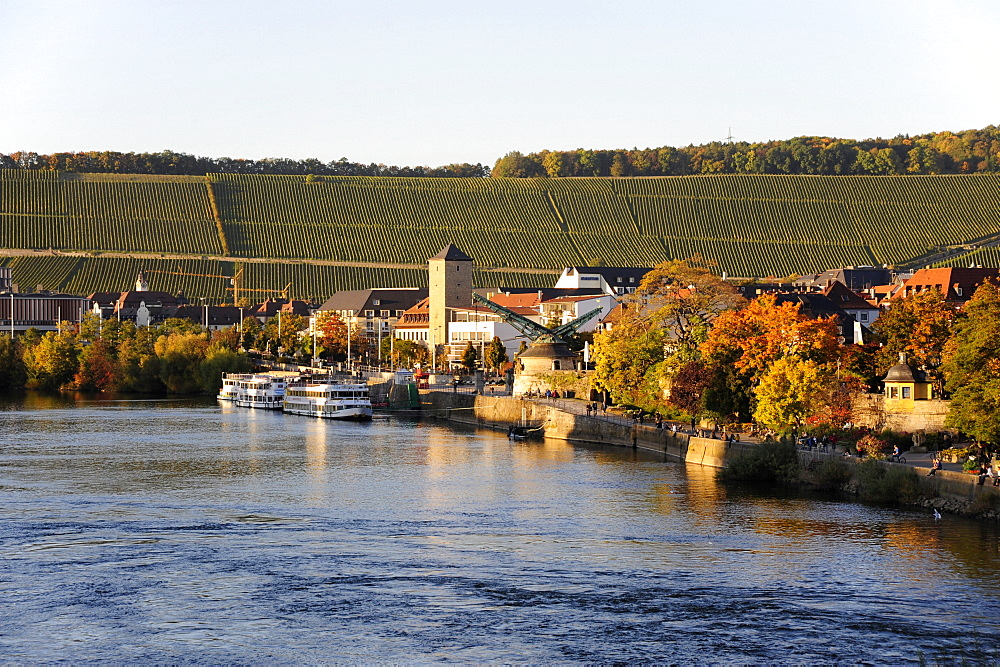 Excursion boats on the Main river, at back the Wuerzburger Stein vineyard, Wuerzburg, Wuerzburg, Lower Franconia, Bavaria, Germany, Europe