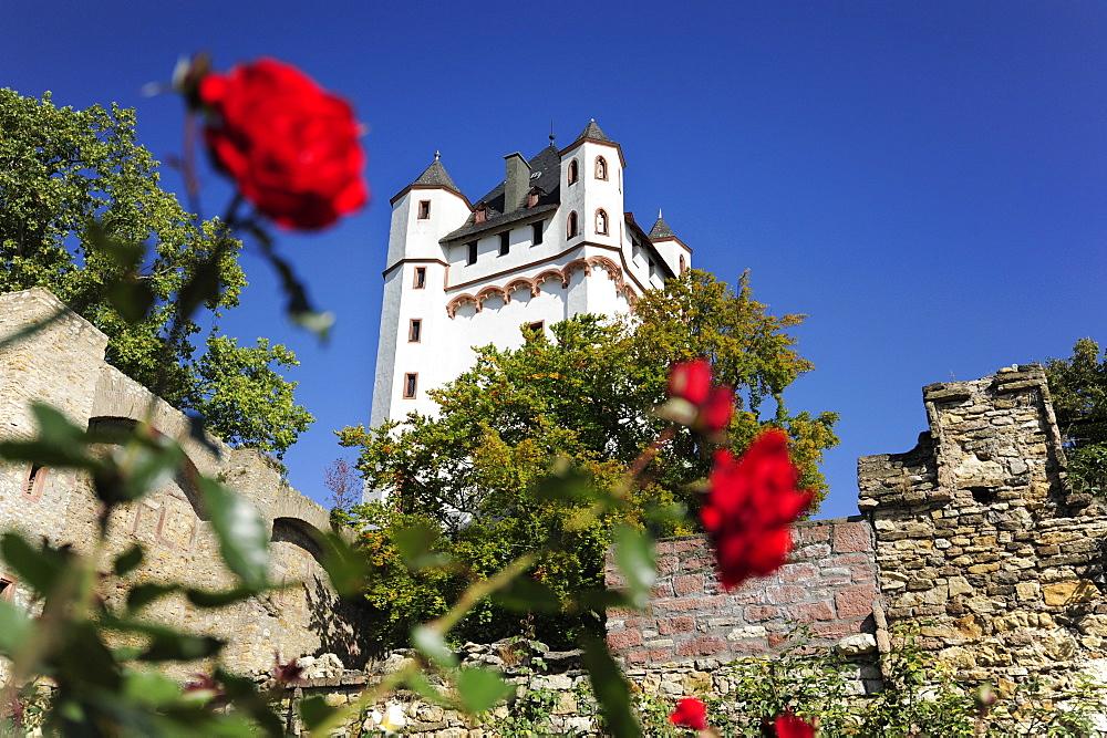 Castle of Eltville hidden behind red roses, Eltville am Rhein, Rheingau-Taunus-district, Hesse, Germany