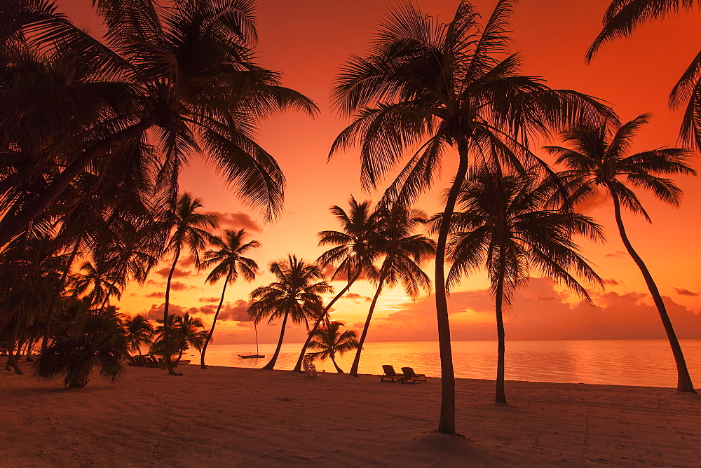 Beach with palm trees in the morning light at sunrise, Moorings Village Resort, Islamorada, Florida Keys, Florida, USA