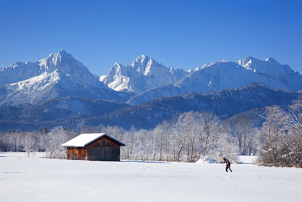 Cross-country skier with alpine backdrop near Schwangau, near Fuessen, Allgaeu, Bavaria, Germany