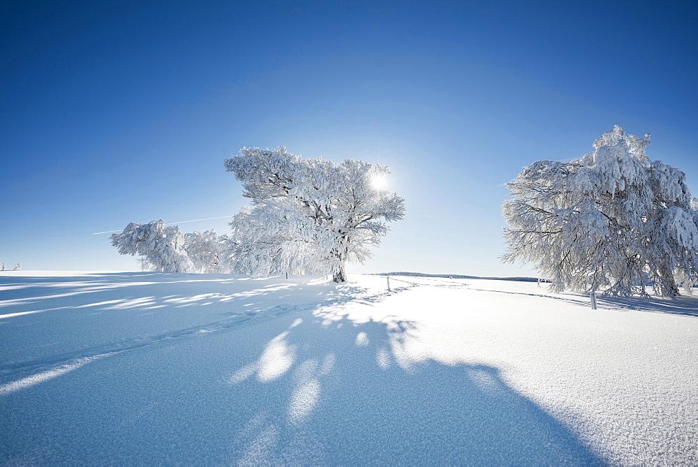 Footprints in fresh snow and snow covered trees, Schauinsland, near Freiburg im Breisgau, Black Forest, Baden-Wuerttemberg, Germany