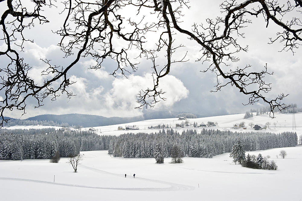 Cross-country skier near Breitnau, near Hinterzarten, Black Forest, Baden-Wuerttemberg, Germany