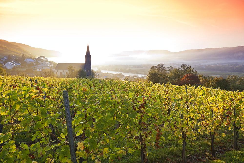 Vineyards in Lieser an der Mosel with church tower, Lieser, Rheinland-Pfalz, Germany