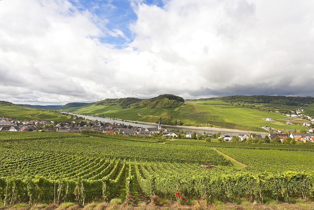 Wine trail with view towards Nittel and the Moselle river, Nittel, Rheinland-Pfalz, Germany