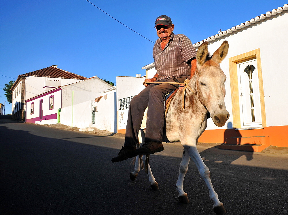 Farmer  on a donkey in Cabo da Praia near Praia da Vitoria, Island of Terceira, Azores, Portugal