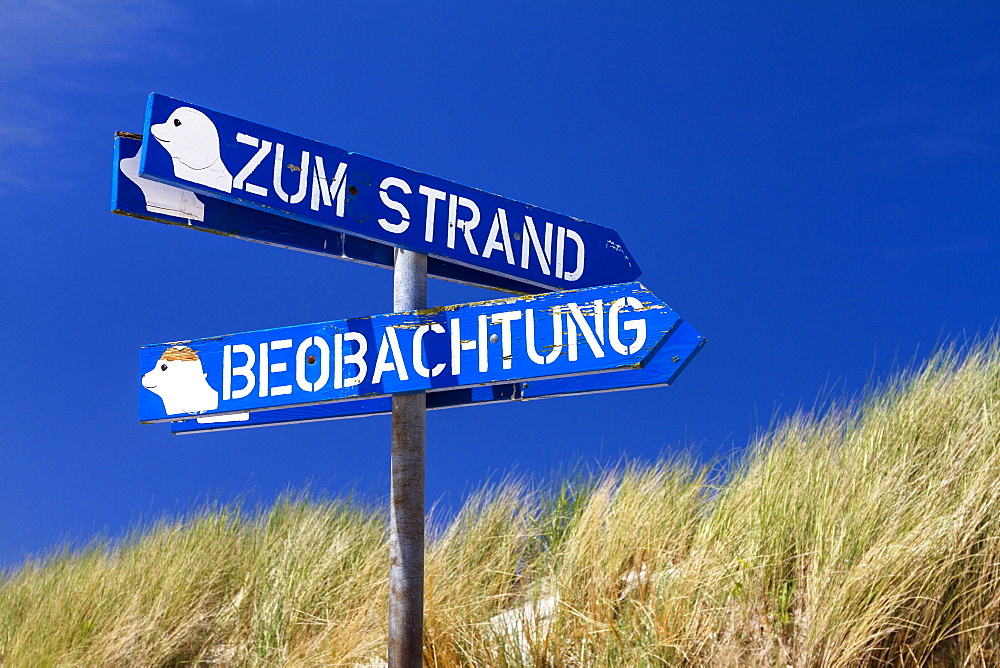 Signposts to the beach and seal observation point, Osterhook, Langeoog Island, North Sea, East Frisian Islands, East Frisia, Lower Saxony, Germany, Europe