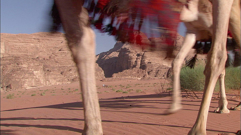 Feet and legs of Camels walking across sand of desert landscape with bushes and mountains behind, Wadi Rum, The Valley of the Moon, Jordan, Hashemite Kingdom of Jordan, Western Asia