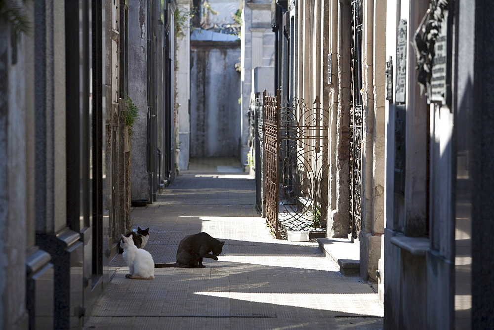 Cats at the Cementerio de la Recoleta, Buenos Aires, Capital Federal, Argentina