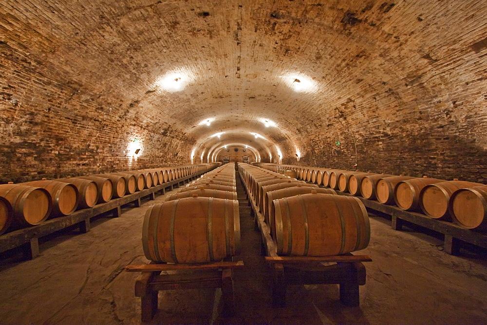 French oak barrels in the historic cellar of Viña Cousiño Macul winery, Santiago, Región Metropolitana, Chile