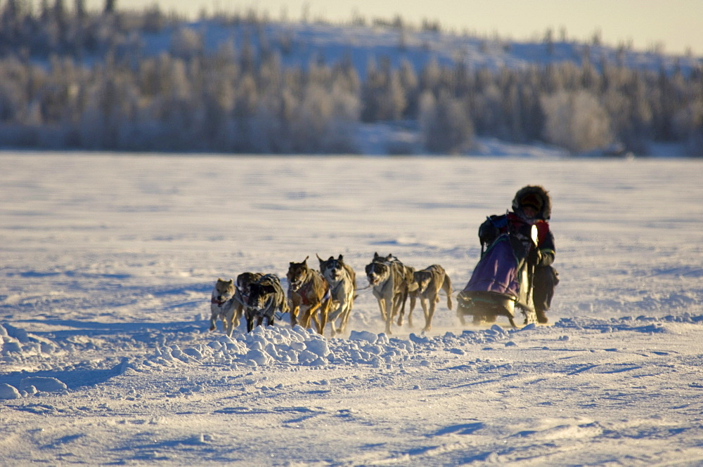 Dog Sled Race, Back Bay, Yellowknife, Northwest Territories