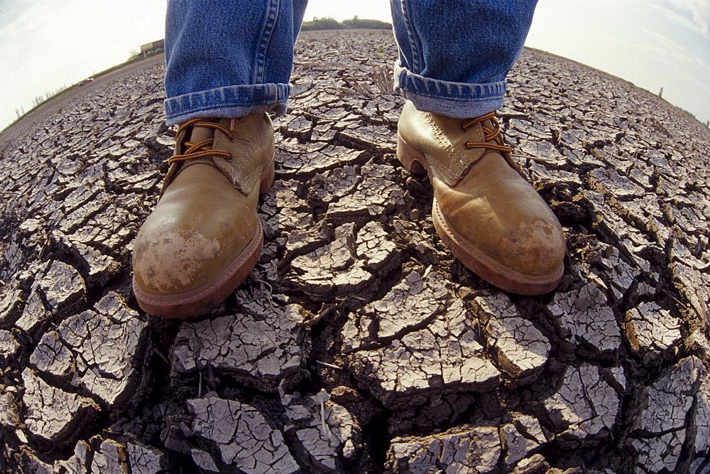 Farmer Standing on Dry Farmland, Red River Valley, Manitoba - 1116-15125