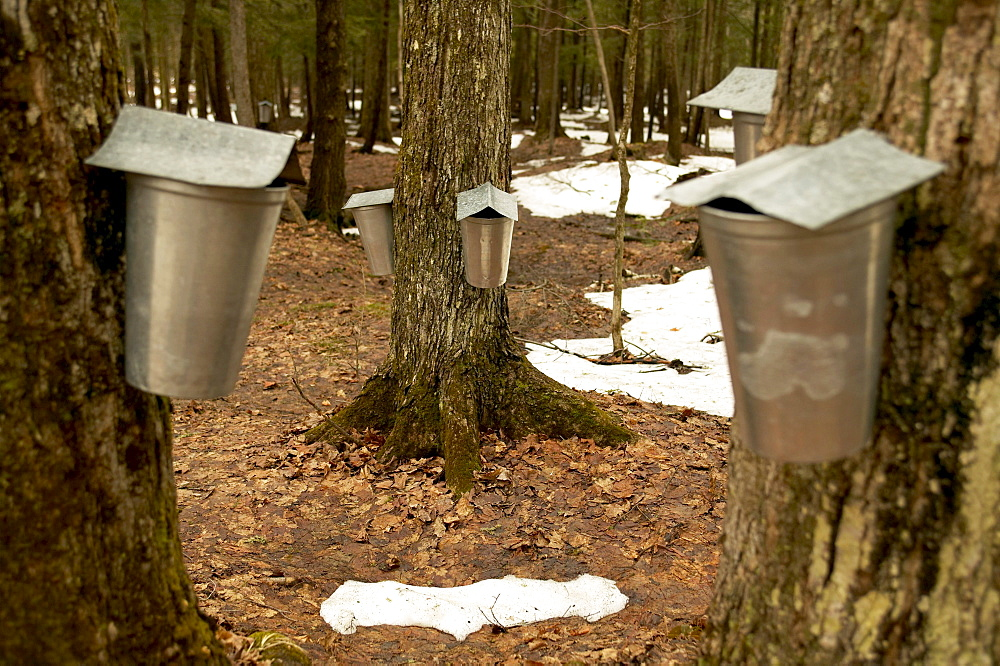 Cabane Sugar Shack, Brome-Missisquoi Region, Saint-Faustin, Quebec