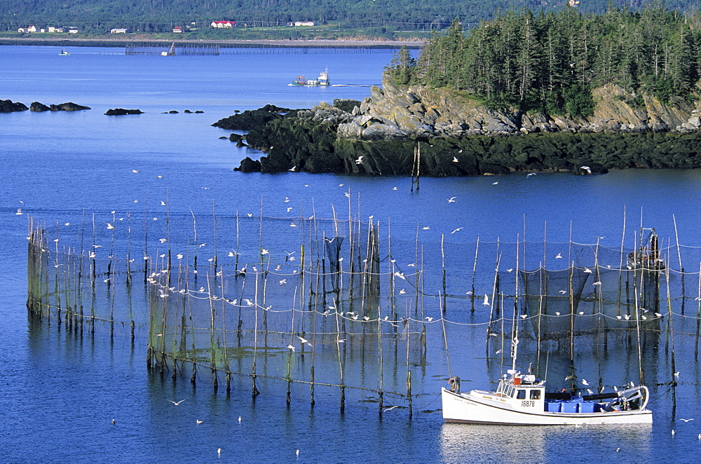 Fish Weir, Grand Manan Island, Pettes Cove New Brunswick.